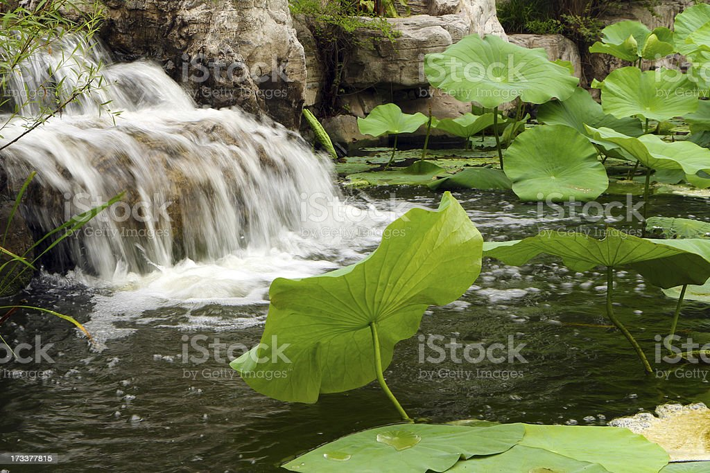 Waterfall and lotus leaf royalty-free stock photo