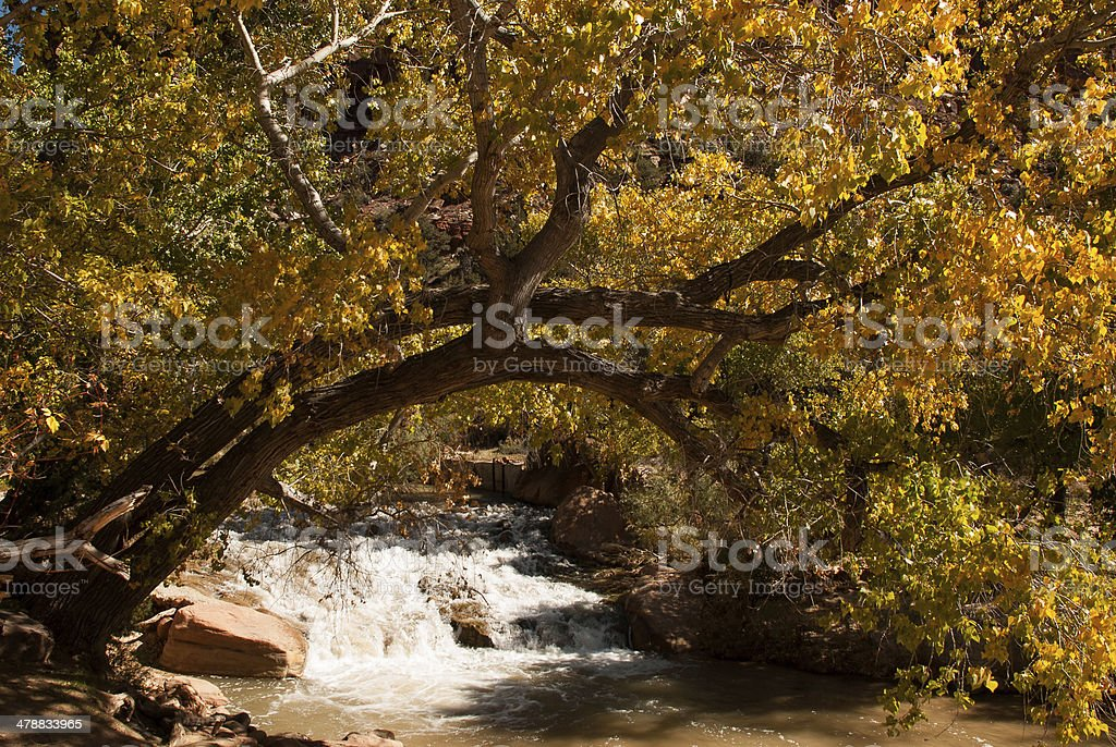Waterfall and Scraggly Cottonwood Tree Zion National Park Utah stock photo
