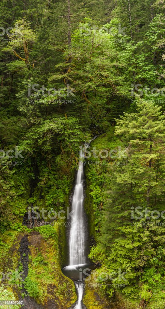 Waterfall cascading into clear pool in green forest stock photo