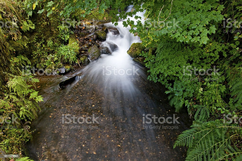 Waterfall flows through a lush forest stock photo