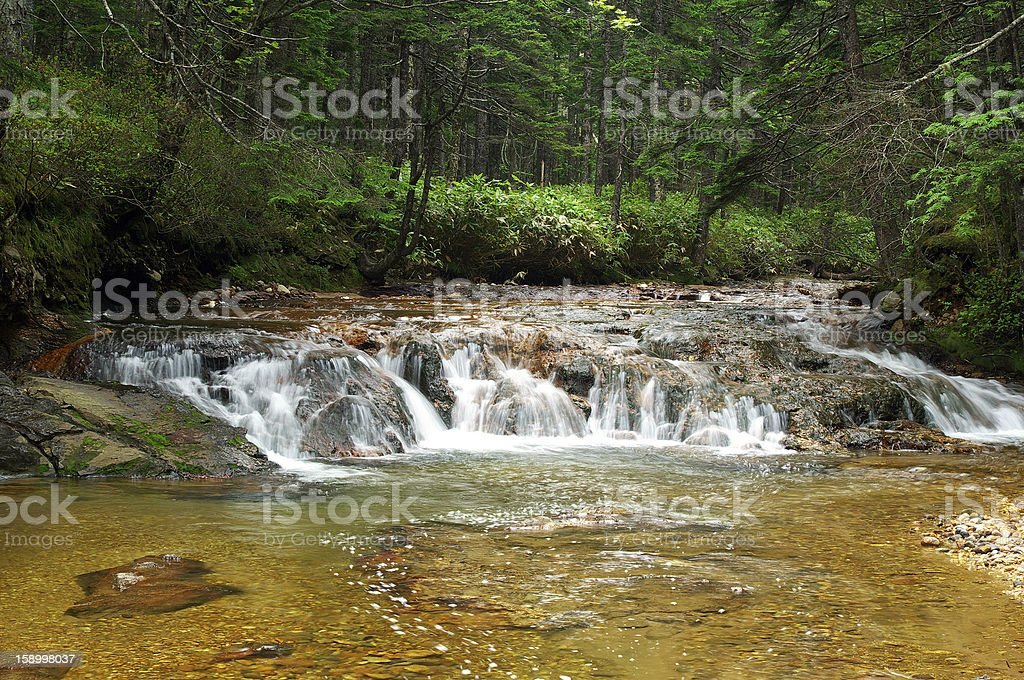 Waterfall forest royalty-free stock photo