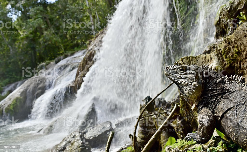 Waterfall in a lush rainforest. stock photo
