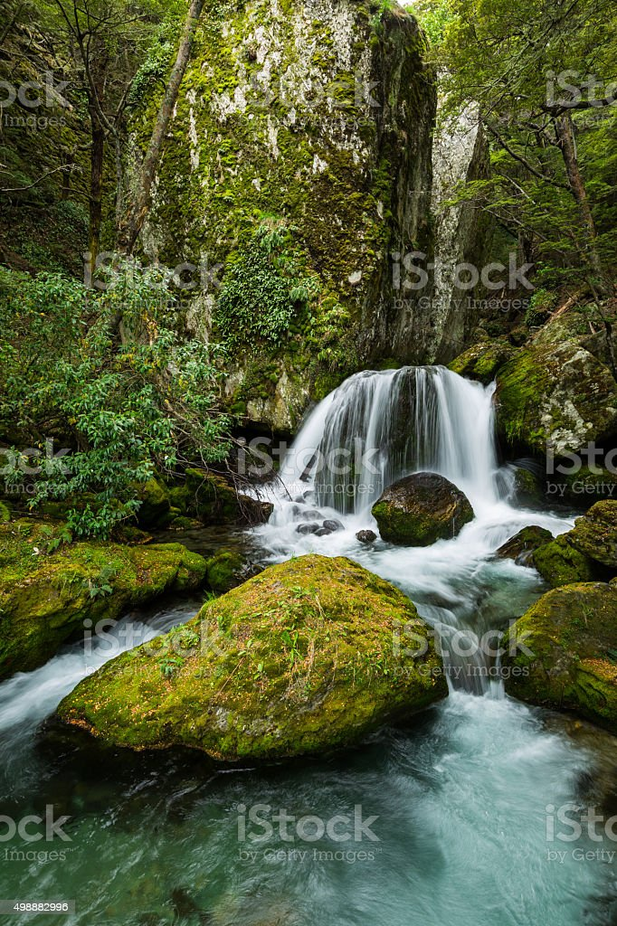waterfall in beech forest stock photo