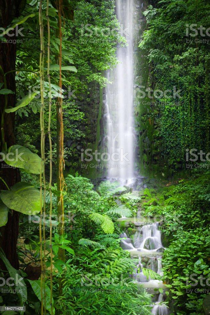 Waterfall in Jungle stock photo