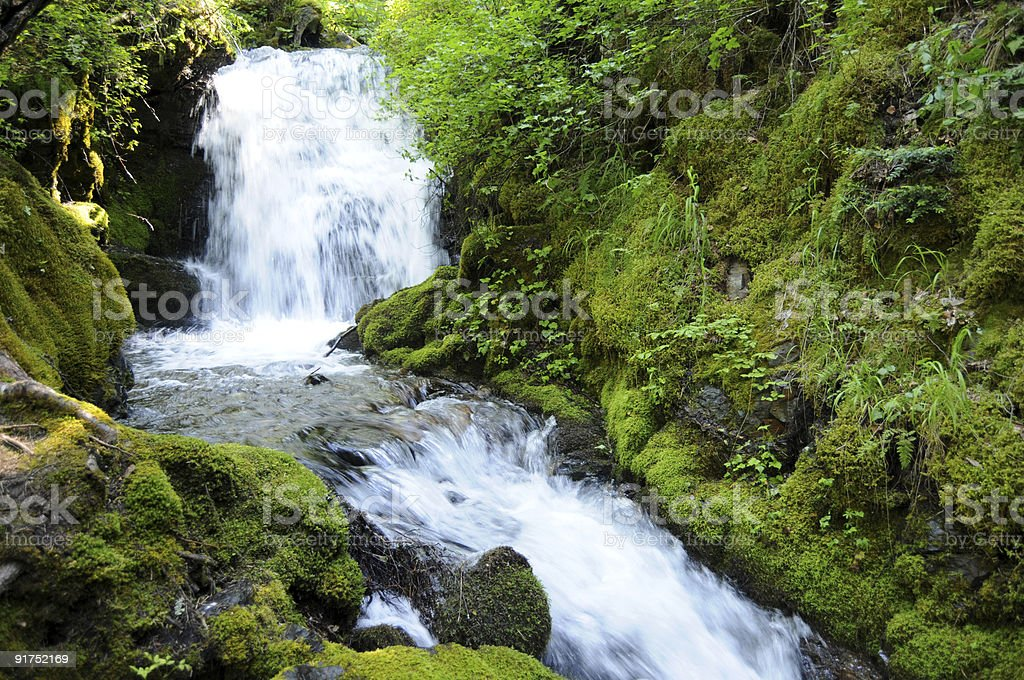 Waterfall in lush forest royalty-free stock photo