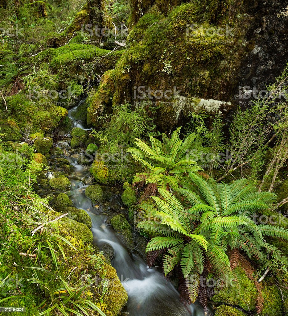 Waterfall in Lush Temperate Rainforest stock photo