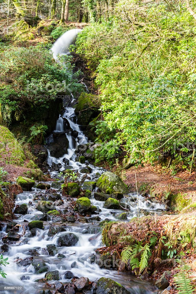 Waterfall in mossy woodland. stock photo