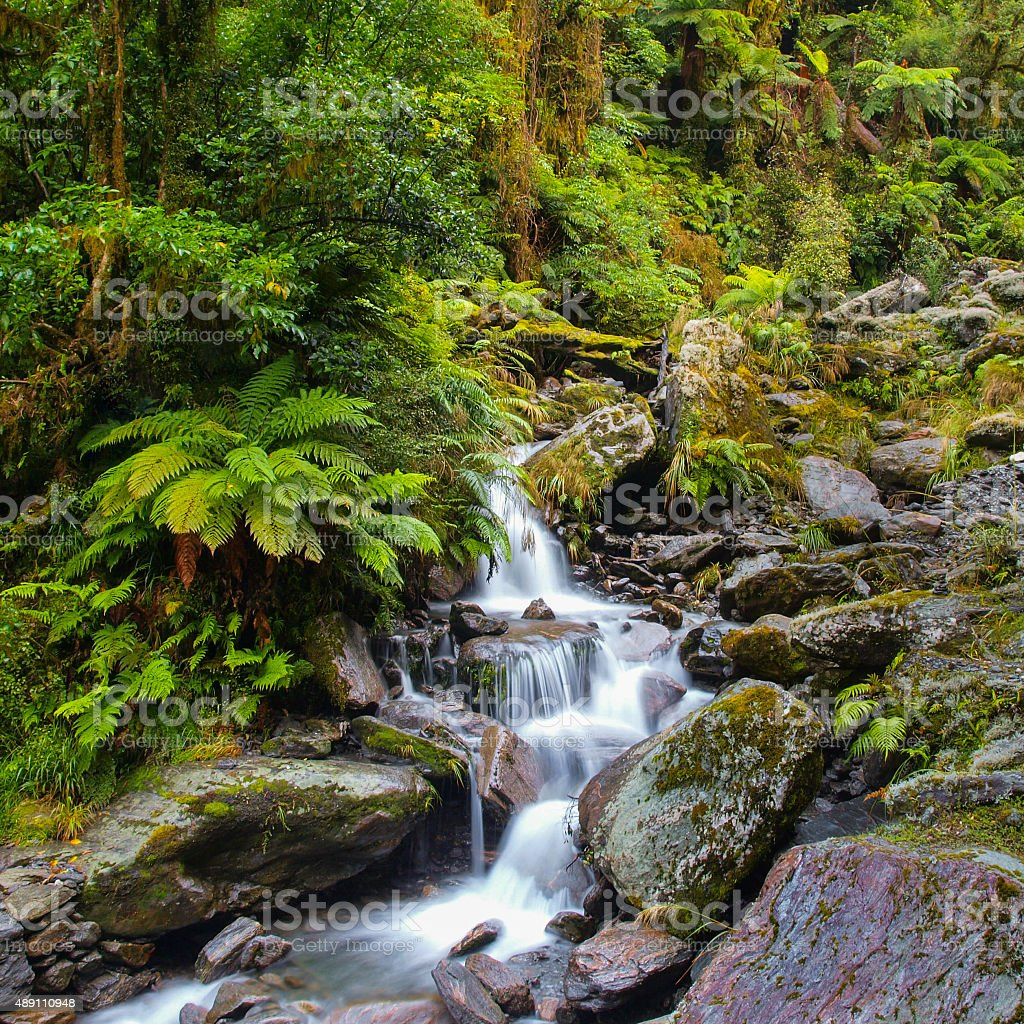 Waterfall in New zealand rain forest stock photo