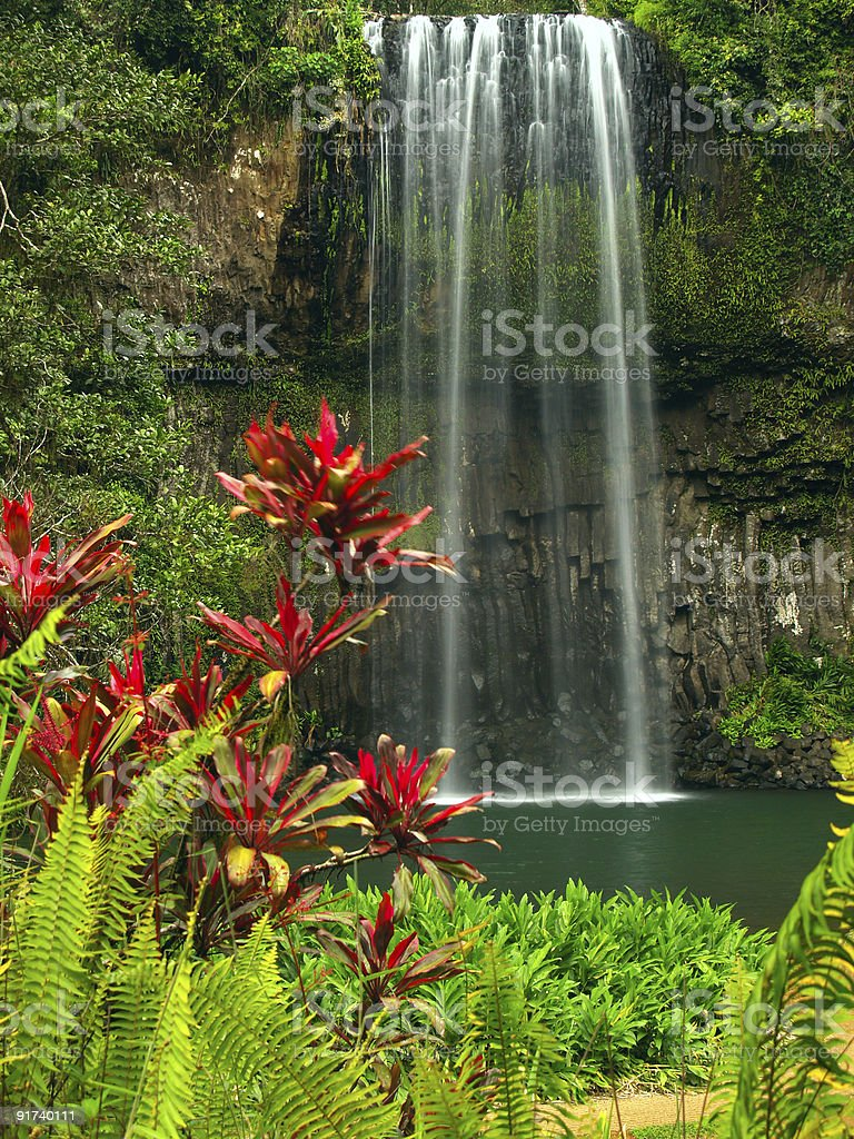 Waterfall in Queensland with red flowers and greenery royalty-free stock photo