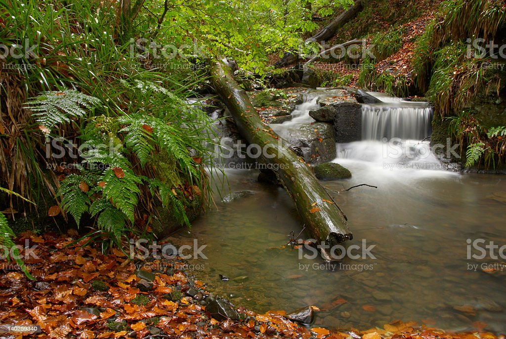 Waterfall in Scottish Forest with fantastic autumnal colours royalty-free stock photo