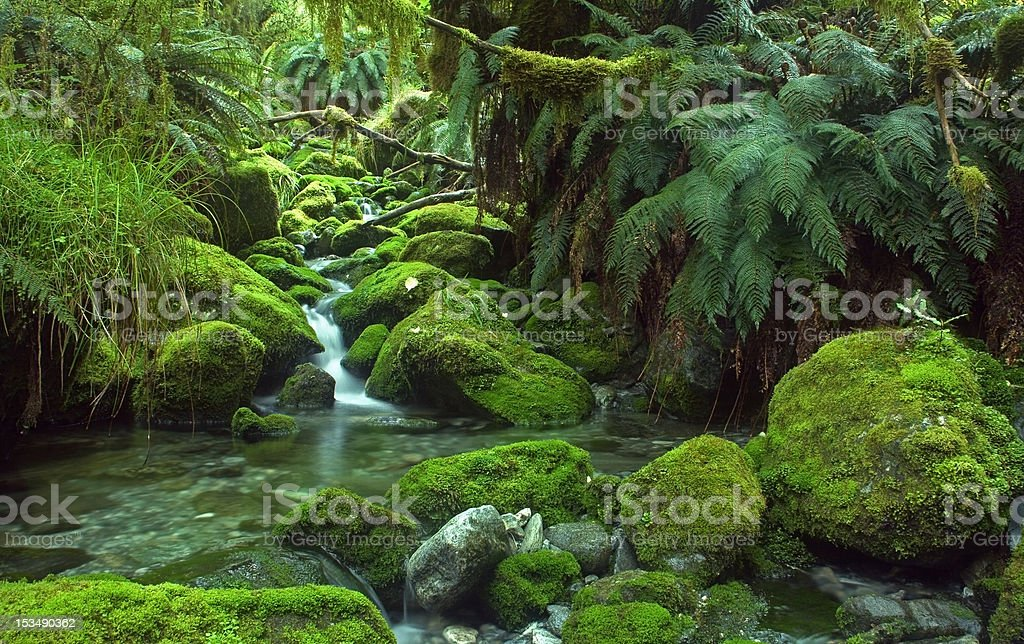 Waterfall in the Enchanted Forest stock photo