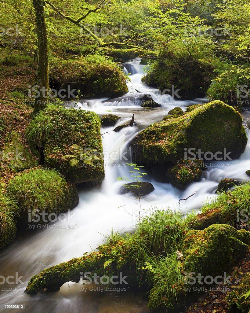 Chute d'eau dans les bois photo libre de droits