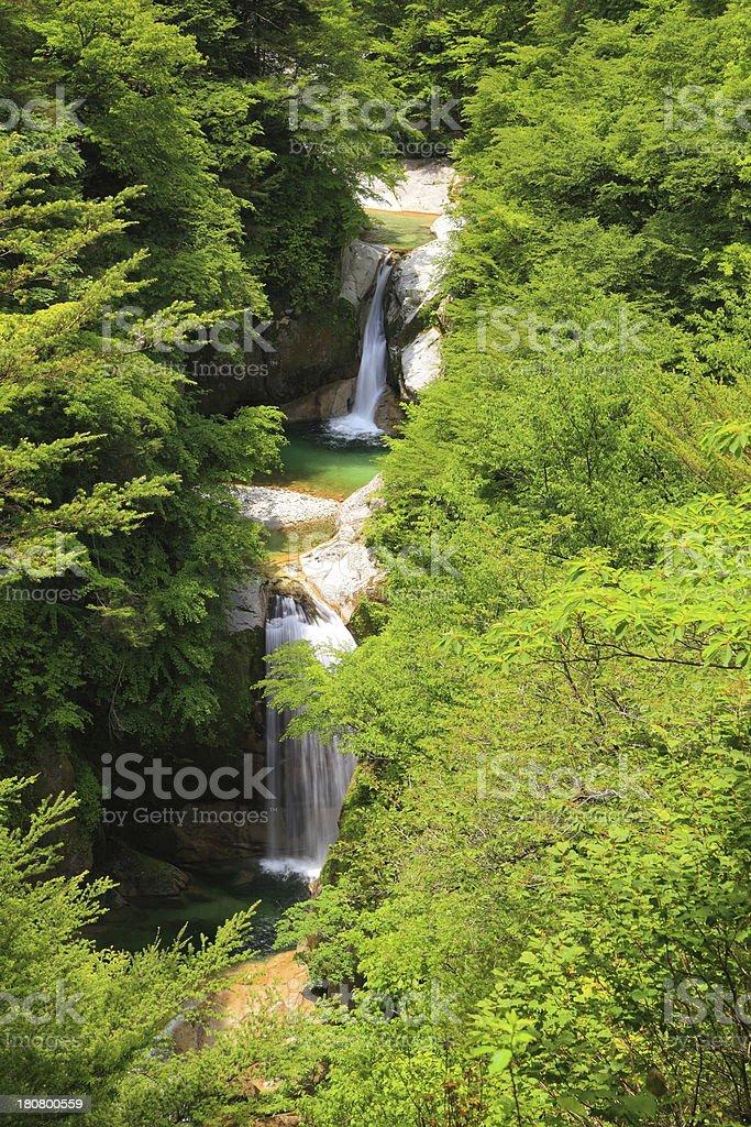 Waterfall of fresh green royalty-free stock photo