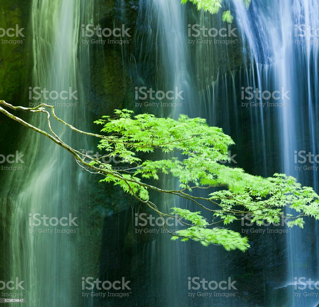 Waterfalls behind Japanese maple leaves stock photo