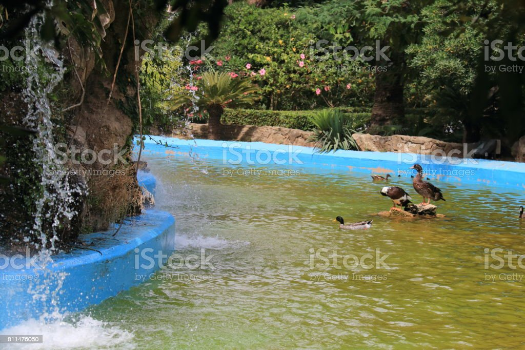 Waterfalls in the duck pond stock photo