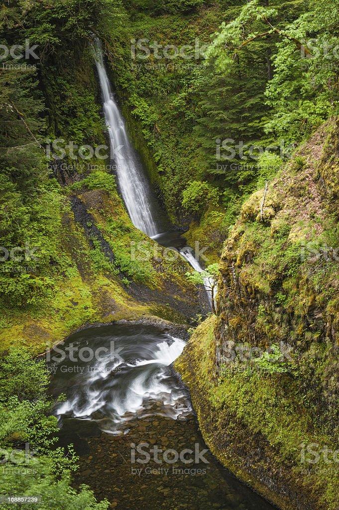 Waterfalls plunging through green rainforest ravine Oregon stock photo