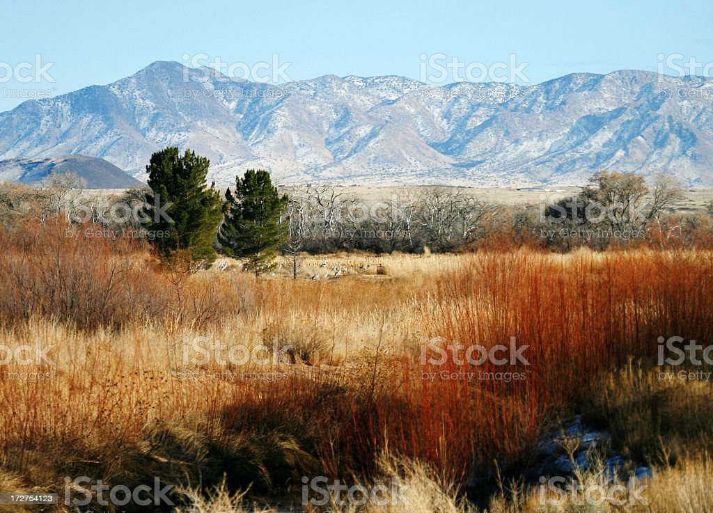 Waterfowl Complex in New Mexico at Winter stock photo