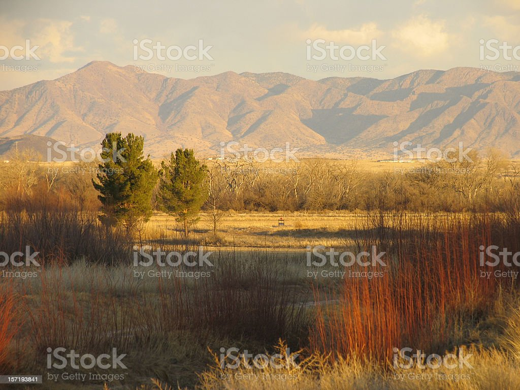 Waterfowl Complex in New Mexico stock photo