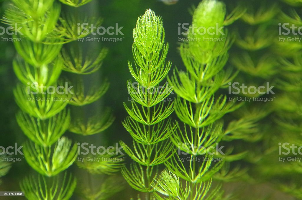 Watergrass stock photo