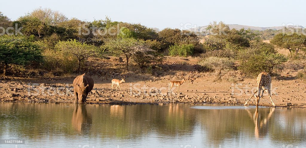 Waterhole scenic stock photo