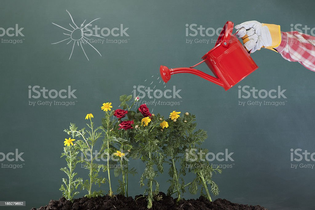Watering can and flowers on green blackboard royalty-free stock photo