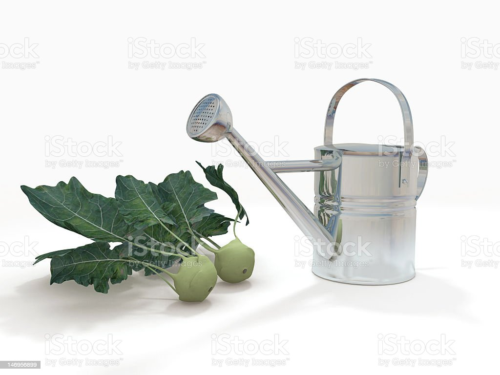 watering can and kohlrabi royalty-free stock photo