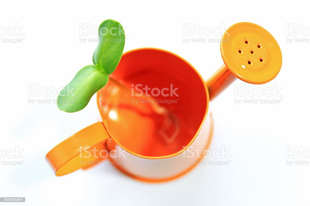 Watering can and sunflower sprout stock photo