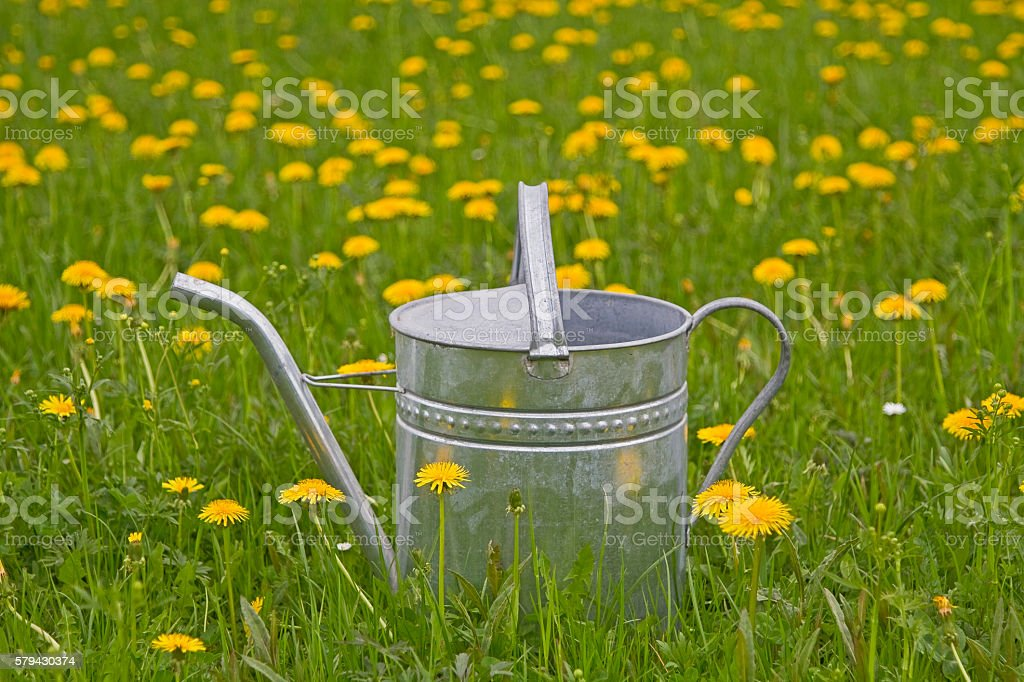 Watering can in flower meadow stock photo