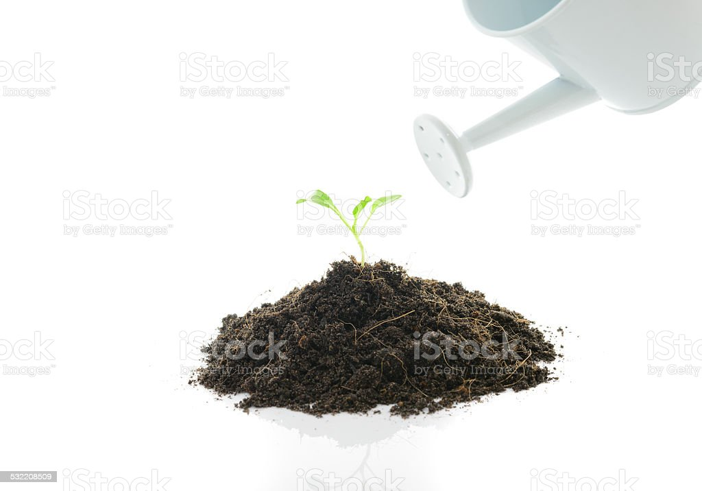 watering can pouring water on a seedling stock photo