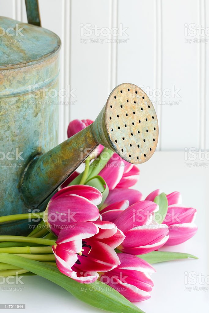 Watering can with flowers stock photo