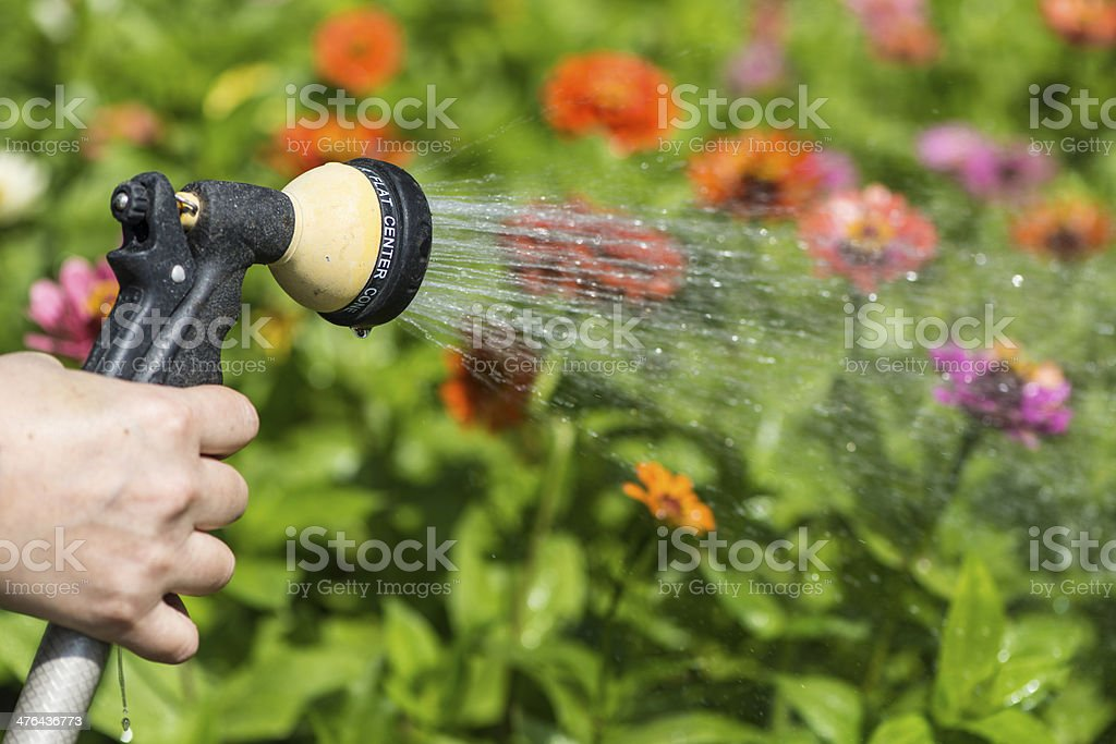 watering flower garden stock photo