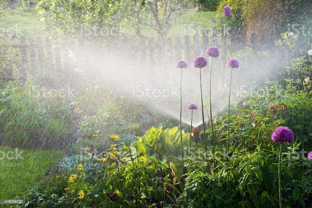 Watering flowerbeds stock photo