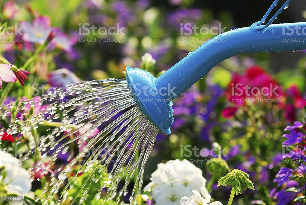 Watering flowers stock photo