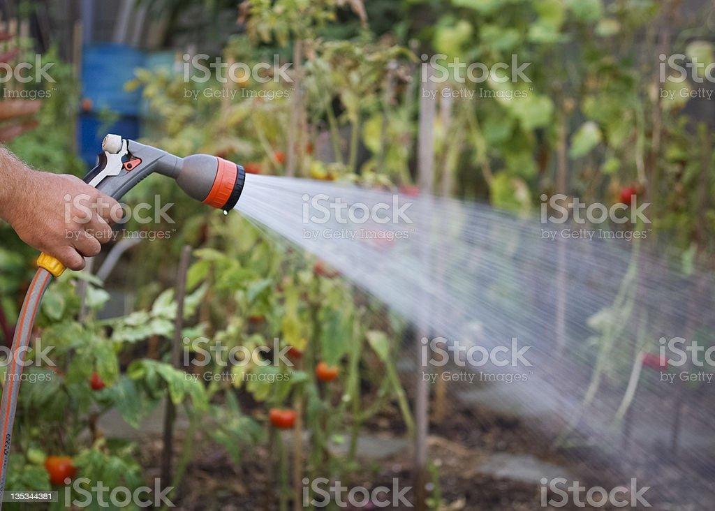 Watering garden royalty-free stock photo