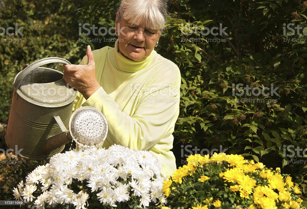 Watering her summer flowers royalty-free stock photo