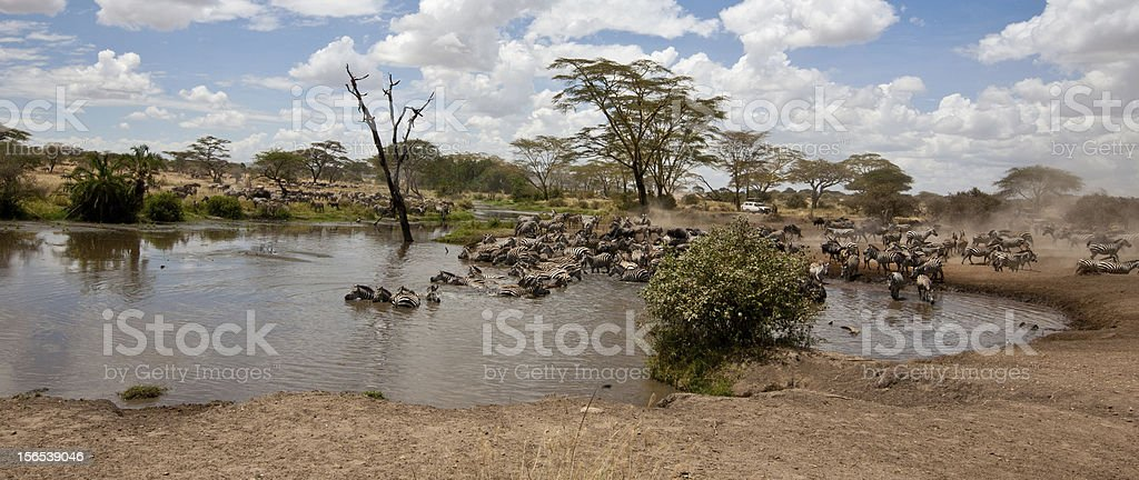 Watering Hole stock photo