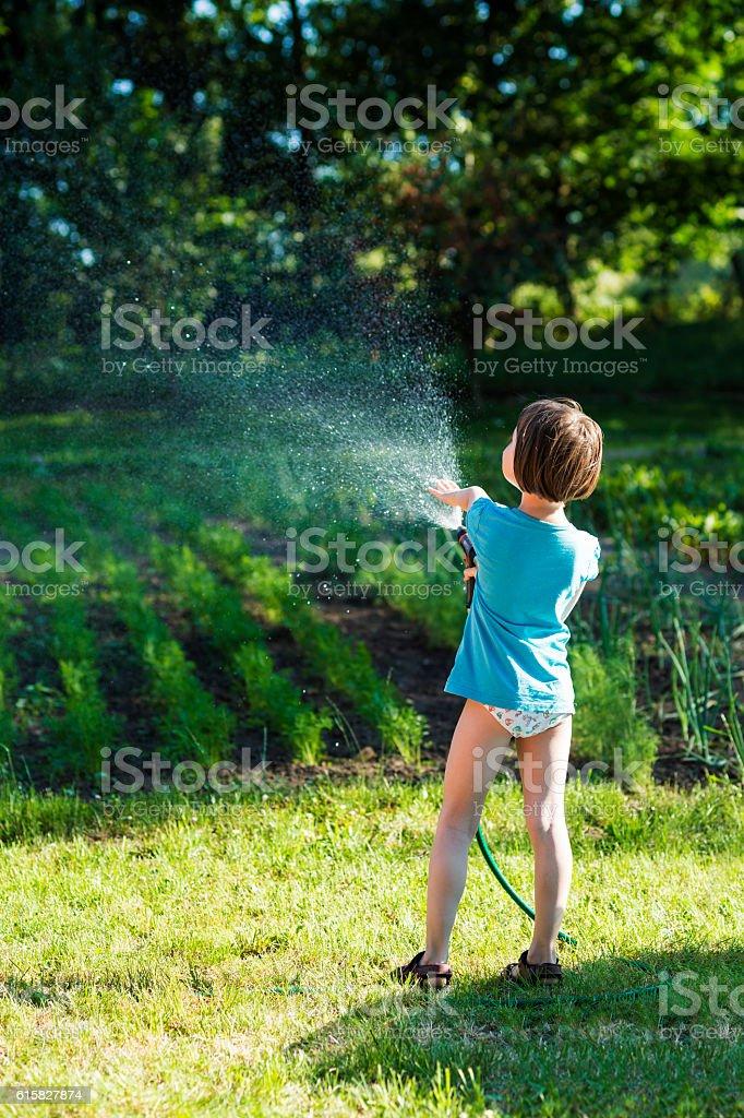 Watering in sun stock photo