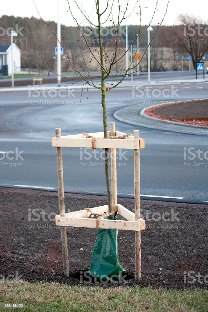 Watering / irrigation on newly planted tree stock photo