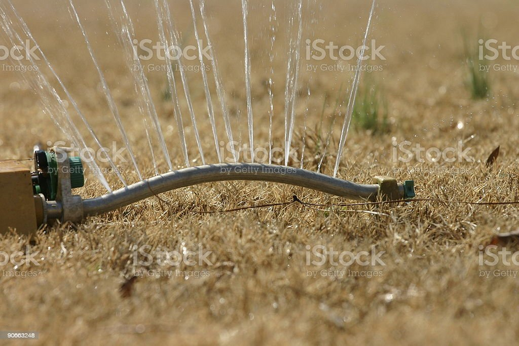 Watering Lawn royalty-free stock photo