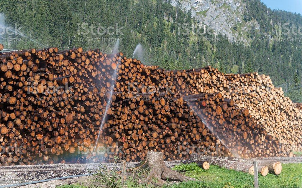 watering many tree trunks stock photo