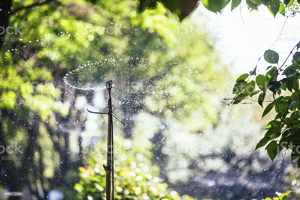 watering royalty-free stock photo