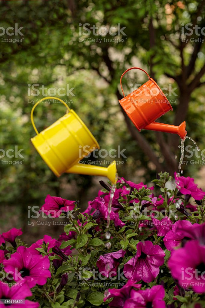 watering stock photo