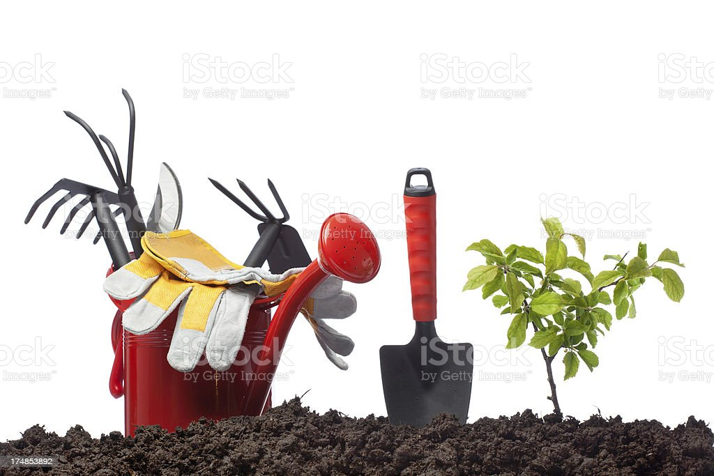 Watering plant on white background stock photo