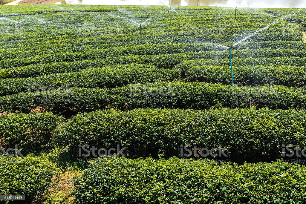 Watering plants in the garden stock photo