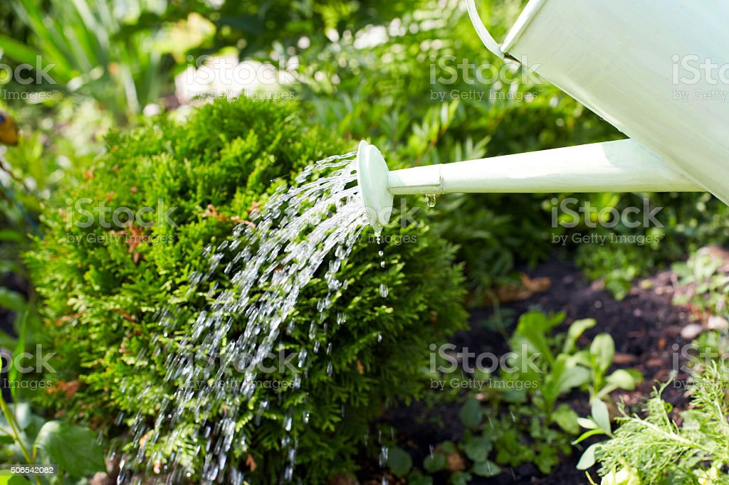 Watering plants with a watering can stock photo