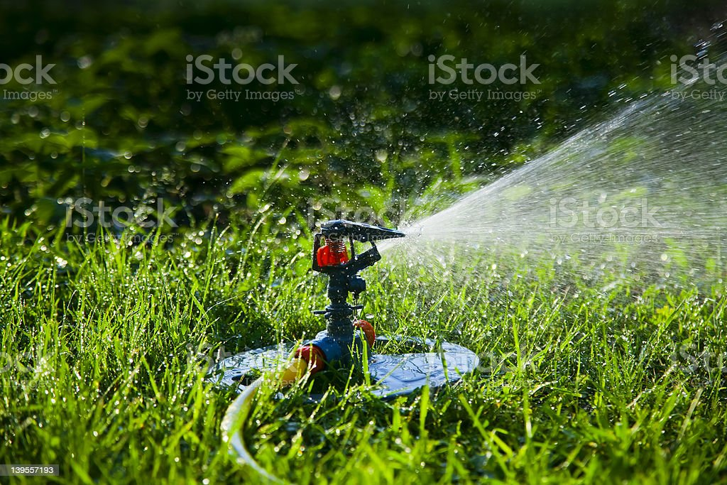 Watering the garden and lawn royalty-free stock photo