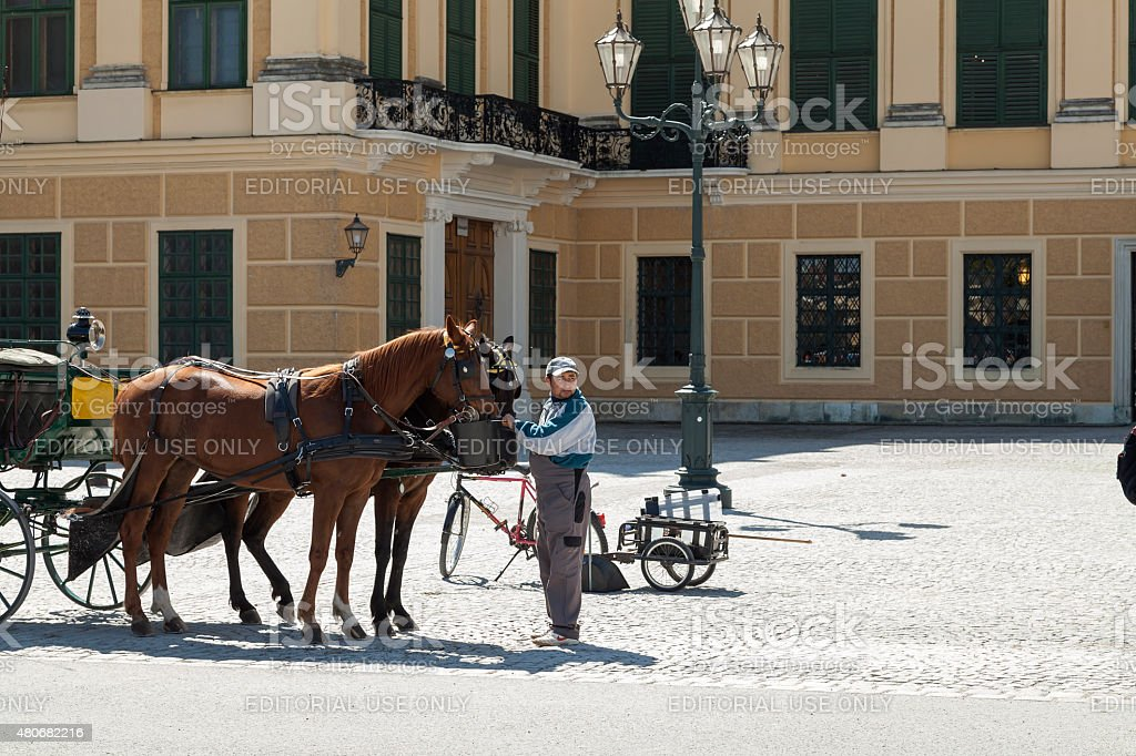 watering the horses royalty-free stock photo
