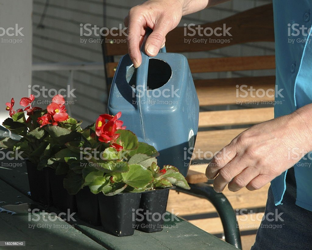 Watering the new plants stock photo