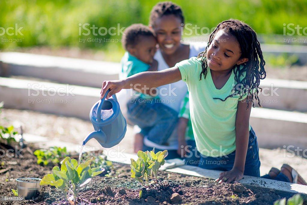 Watering the Vegetable Garden stock photo