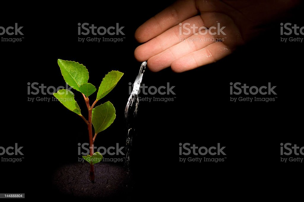 Watering tree royalty-free stock photo